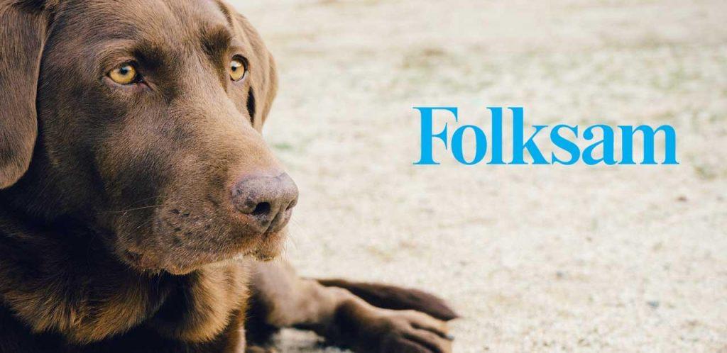 Foksam hundförsäkring